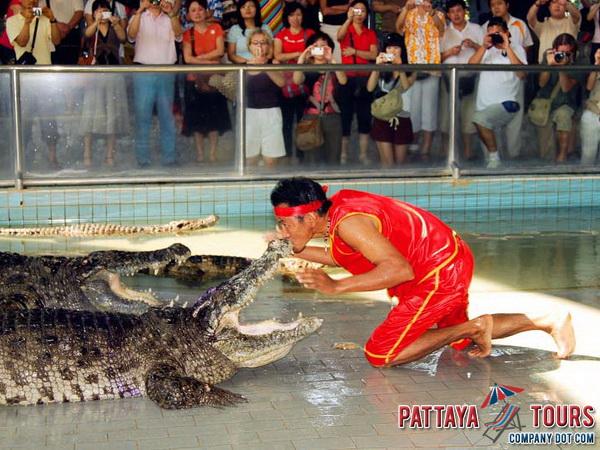 Pattaya Tours Company Dot Com